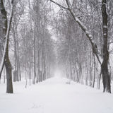 Snow fall in the morning on town alley Royalty Free Stock Image