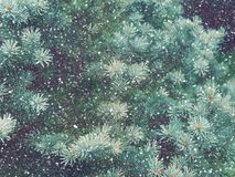 Snow fall in winter forest. Christmas magic. Snow fall in winter forest. Christmas new year magic. Blue spruce fir tree branches detail Stock Photo
