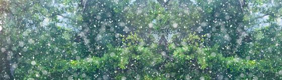 Christmas snow fall forest background banner. Snow fall in winter forest. Christmas new year magic. Trees branches detail long banner Royalty Free Stock Photography