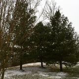 Snow Fall. Winter Trees Cold Stock Photo