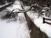 Snow and Fallen Tree in Georgetown royalty free stock image