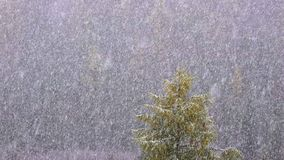 Snow Falling Against A Forest Background. Of Trees In A Rural Setting, Another Snowfall Of Winter stock video footage