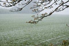 Snow falling in april Stock Photos