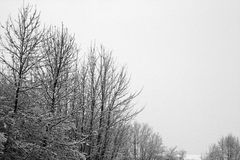 Snow Falling on Bare Trees Stock Photography