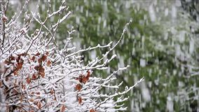 Snow falling on branches stock footage