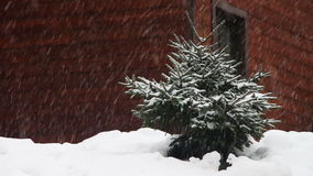 The snow is falling and Christmas tree stock video