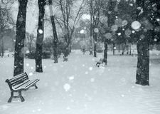 Snow is falling. Snow falling in city park Royalty Free Stock Image