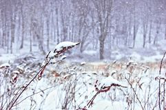 Snow Falls in Winter Meadow. Snow falling in a cold meadow in upstate New York. One of the more daring adventures I`ve made royalty free stock photography