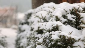 Snow falling fir tree branches, wooden cottages on background. Heavy snowfall at mountain village ski resort. Cold. Frosty winter day in the mountains stock footage