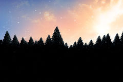 Snow falling on fir tree forest Royalty Free Stock Photo