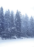 Snow falling forest. Snow falling heavily with winter forest landscape on background Royalty Free Stock Images