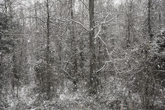 Snow falling in forest Stock Photos