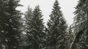 Snow Falling in Forest stock video