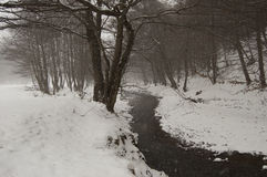 Snow falling in a forest with river in winter Stock Photos