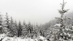 Snow Falling in Forest stock footage