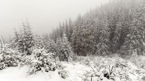 Snow Falling in Forest. Winter stock footage