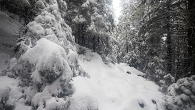 Snow Falling in Forest stock video footage