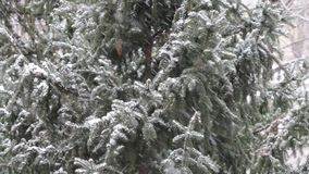 Snow falling in front of trees. Close up view of snow falling in front of trees stock footage