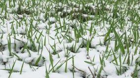 Snow falling on grass. Winter design concept stock video