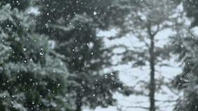 Snow Falling. High Shutter Speed stock video footage