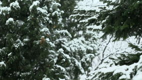 Snow Falling In Nature 04.  stock video footage