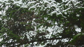 Snow Falling In Nature 01.  stock video footage