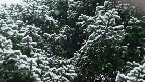 Snow Falling In Nature 05.  stock footage