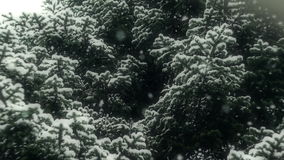 Snow Falling In Nature 08 Graded.  stock video footage