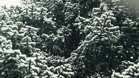 Snow Falling In Nature 07 Graded.  stock video footage