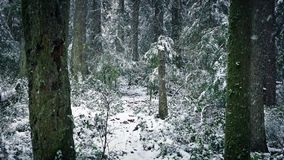 Snow Falling On Path Through Winter Forest stock video