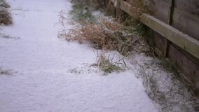 Snow falling on pathway on winter day