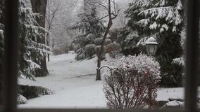 Snow Falling with Playful Squirrel stock video footage