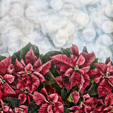 Snow Falling on Poinsettia Plant with Bokeh Lights Royalty Free Stock Photo