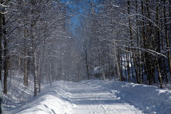 Snow falling on road. In sunny shining Stock Photo