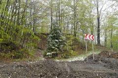 Snow falling Romania Carpathian Royalty Free Stock Photography