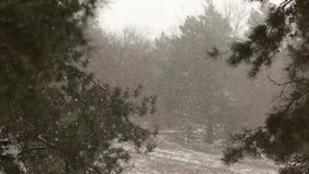 Snow falling in slow motion, flakes swirling and drifting against a backdrop of spruce and pine trees with snow covered. Snow falling in slow motion, flakes stock video footage