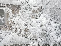 Snow is falling. Outdoors cropped shot with trees and house trapped in snow stock photo