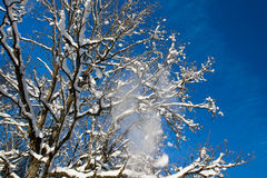 Snow falling from tree. Branches Stock Photo