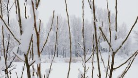 Snow falling on tree branches in Winter christmas season background. Beautiful nature landscape. Snow falling on tree branches in Winter christmas season stock footage