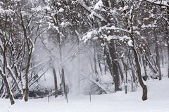 Snow falling from the tree. In the forrest Stock Images