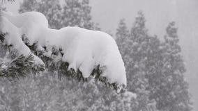Snow falling on the tree,in Toyama,Japan stock footage