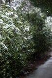 Snow falling on trees stock photo