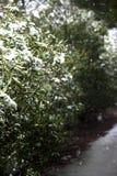 Snow falling on trees royalty free stock photo