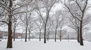 Snow on trees and grounds.Nature in winter royalty free stock photos