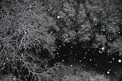 Snow falling trees Stock Photos