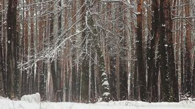 Snow falling from trees in winter park (forest), slow motion. Stock footage stock video footage