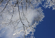 Snow falling from treetops Stock Photos