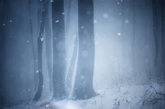Snow falling in winter in forest stock photo