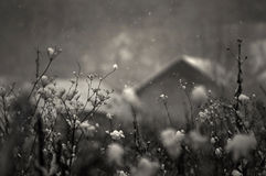 Snow falling in winter with house in background Stock Image