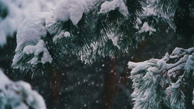 Snow Falling in Winter Pine Forest with Snowy Christmas Trees. Slow Motion stock footage
